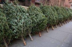 На Луганщине проводятся совместные рейды с целью недопущения  незаконной вырубки хвойных деревьев