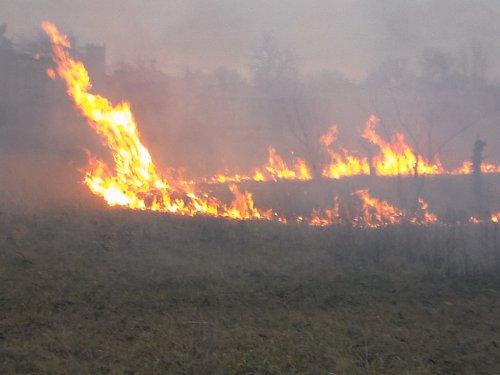 Спасатели Старобельщины советуют гражданам не сжигать сухостой (фото)