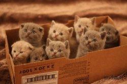 В Киеве зоозащитники просят не замуровывать котов в подвалах