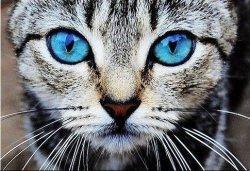 В Киеве запретили вылов бездомных кошек