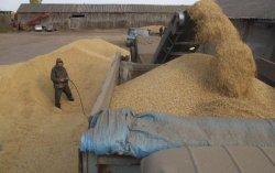 Террористы увеличили продажу зерна из Луганской области в Россию