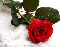Роза на снегу, или Почему в Чехии живут лучше, чем в Украине
