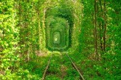 Въезд в «Тоннель любви» стал платным