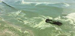 В Одессе запретили купаться в море