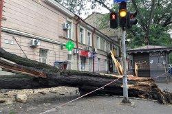 В Одессе ураган сломал 53 дерева и травмировал женщину - фото