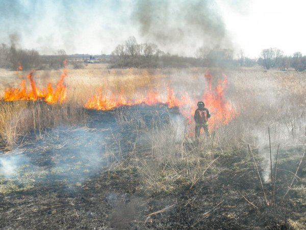 ГБР открыло дело на чиновников Луганской области за лесные пожары
